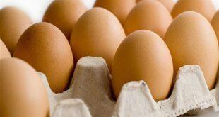 توقعات بانخفاض أسعار البيض إلى 3500 ليرة للطبق