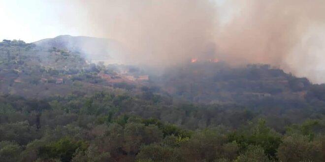 حريق ضخم في البسيط .. وإخماد 7 حرائق في اللاذقية