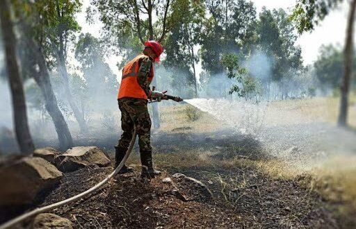 3800 دونم أضرار الأشجار المثمرة نتيجة الحرائق بـ حمص