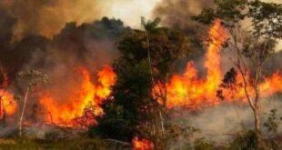 اشتباه بستة أشخاص بالتسبب في حرائق الغاب