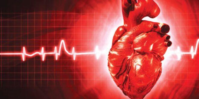 حقائق مذهلة عن طريقة عمل القلب وكيفية ضخّ الدم