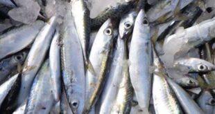 سمك فاسد يتسبب بعشرات حالات التسمم الغذائي في اللاذقية
