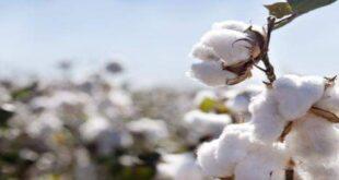 توقعات بارتفاع أسعار الألبسة القطنية بعد القرار الأخير للصناعات النسيجية
