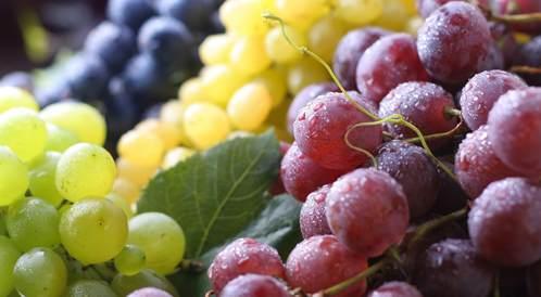 كيف تختارون العنب الجيد