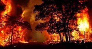 وزارة الزراعة تعلن عن نتائج التحقيقات الأولية في الحرائق في الغاب و مصياف