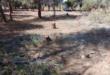 القبض على مجموعة من قاطعي الأشجار الحراجية