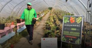 سوري يزرع الملوخية في ألمانيا ويحقق شهرة واسعة بأوروبا