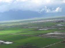"""هل سيتحول سهل الغاب إلى """"هولندا الشرق الأوسط""""؟"""