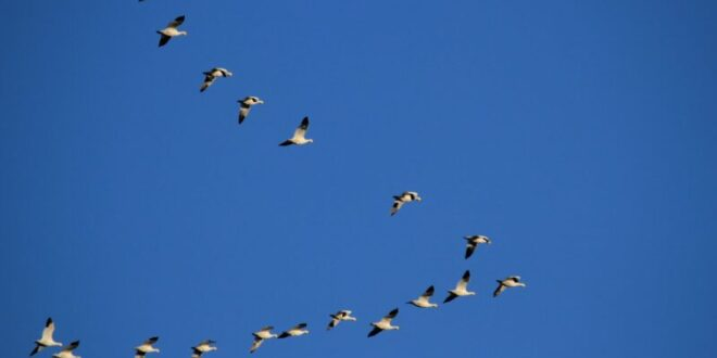الطائر العجيب نصفه ذكر ونصفه أنثى.. شاهد!