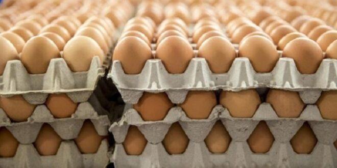 بيض 1