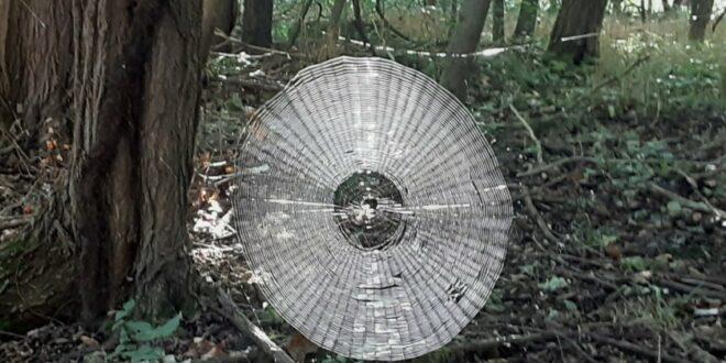 شبكة عنكبوت بحجم إنسان يمكنها الإمساك بالبشر في غابات أمريكا