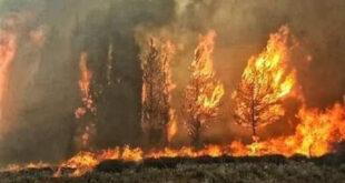 رئيس بلدية البسيط : الوضع سيئ والجبال احترقت بالكامل