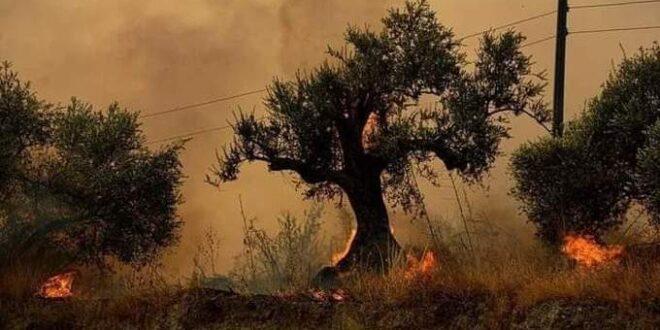 هكذا علّق معتصم النهار وناصيف زيتون وديمة قندلفت ومصطفى الخاني على حرائق سوريا