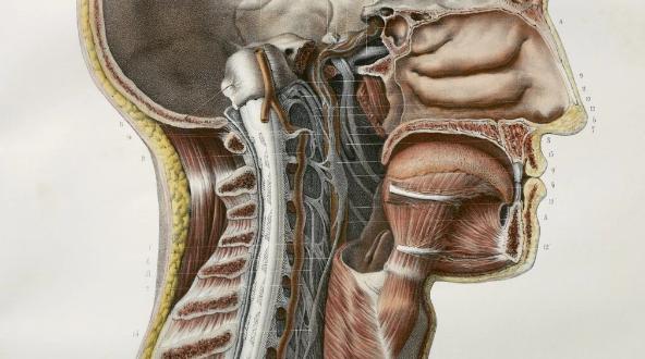 حدث طبي نادر أصاب العلماء بالذهول.. باحثون يكتشفون أعضاء جديدة في الإنسان