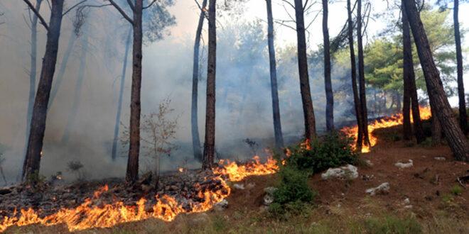 مشهد مرعب... هل هذا جبل تأكله النيران ضمن حرائق اجتاحت سوريا؟