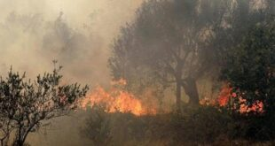 العمل على منح قروض ميسرة للفلاحين المتضررين من الحرائق
