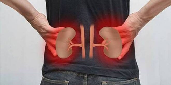طرق لإزالة السموم من الكبد والكلى
