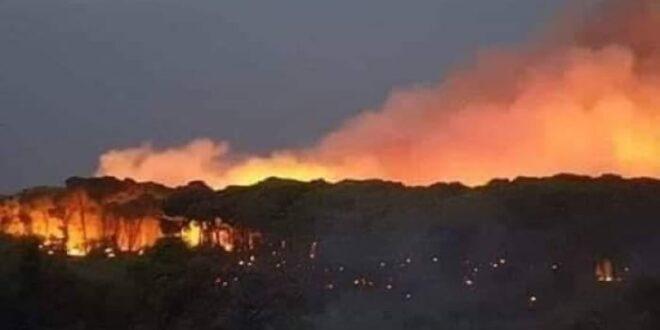 رئيس اتحاد فلاحي اللاذقية: الوضع مأساوي..وأياد خفية وراء الحرائق