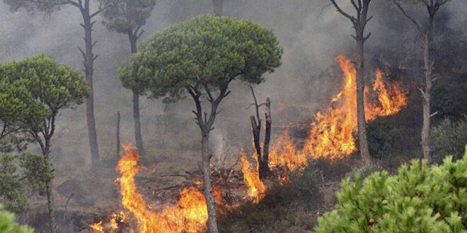 تجار الأخشاب يتوجهون الى المناطق المتضررة جراء الحرائق.. ورئيس اتحاد الفلاحين: لن نسمح لهم!