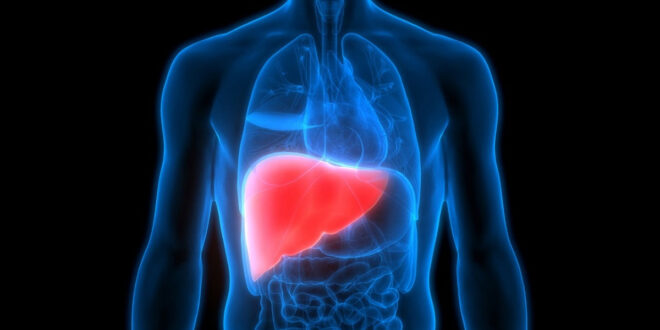 5 أسباب تؤدي لتراكم الدهون على الكبد.. و7 طرق للعلاج