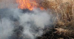 وزارة الزراعة السورية تعلن السيطرة على كل الحرائق