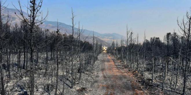 Screenshot 2020 10 13 بعضها 5 سنوات وبعضها 100 عام مهندس زراعي يشرح لتلفزيون الخبر الوقت الذي تحتاجه الأشجار للعودة للحياة ...