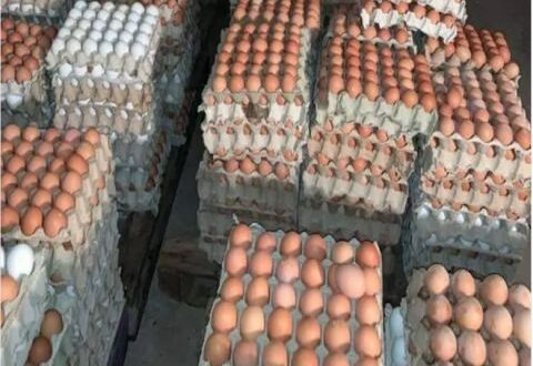 صحن البيض بـ5300 ليرة مع توقعات بارتفاعه اكثر