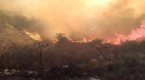 مصدر في شرطة اللاذقية: توقيف أشخاص مشتبه بهم بإشعال الحرائق