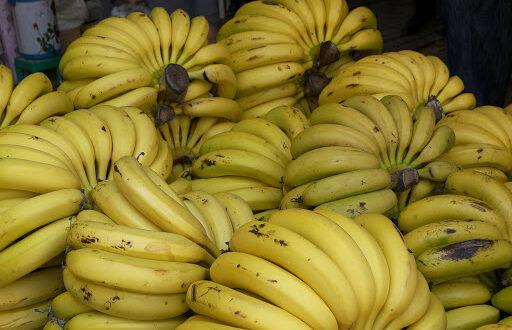 الموز اللبناني في طريقه للأسواق وتوقعات بانخفاض أسعاره