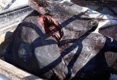 ضبط بقرة نافقة قبل وصولها إلى أسواق اللحوم بحرستا في ريف دمشق
