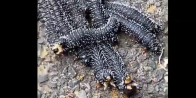 ملايين المشاهدات لفيديو يُظهر مخلوقات غريبة.. معلقون: لن نزور أستراليا بعد الآن