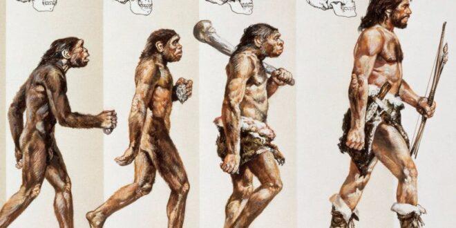 علماء يفجرون مفاجأة: أصل الانسان ليس قرداً وانما... ؟