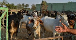 بعد نفوق 1833 بقرة... الحكومة السورية تعتزم الموافقة على استيراد اللحوم المجمدة