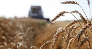 وزير الزراعة: دراسة لأحياء واقع الغوطة واستثمارها لتكون الخزان الغذائي لدمشق