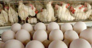 مصدر سوري: ارتفاع أسعار البيض سببه التهريب الى دول الجوار