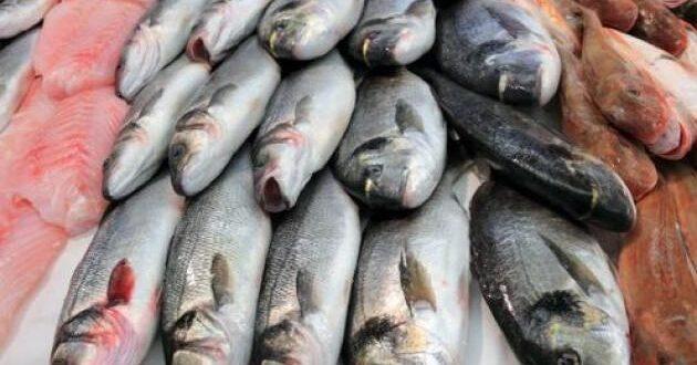 قريباً..إغراق الأسواق السورية بالأسماك…4000 ليرة للكيلو