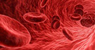 """اكتشاف بروتين وقائي يحمي """"ينبوع الشباب'' في الدم"""