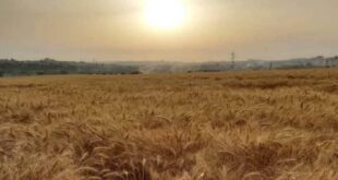 """""""في الحديقة أو البستان"""".. وزير الزراعة السوري يدعو إلى زراعة """"كل متر"""" في البلاد"""