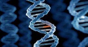 """دراسة بريطانية: """"جين محدد"""" يزيد خطر إصابة الرجال بسرطان الكبد الخطير!"""