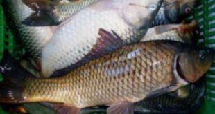 وزارة التجارة: مشروع قريب لتوفير كيلو السمك بـ4 آلاف ليرة