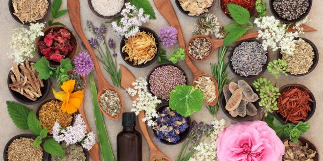 5 نباتات طبّية في الطبيعة.. فوائدها مؤكدة: تقي من السرطان وتعالج حب الشباب