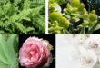أتؤمنون بطاقة النباتات ؟ إليكم 15 نبتة تجلب الطاقة الإيجابية إلى حياتكم