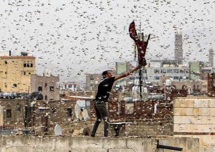 غزو مرعب... أسراب هائلة من الجراد تهاجم السعودية