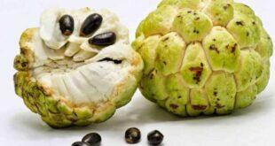 فوائد فاكهة القشطة وفاعلية فاكهة القشطة لعلاج السرطان
