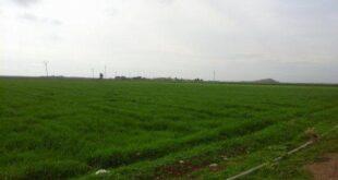انحباس المطر يهدد الزراعة في الجزيرة السورية