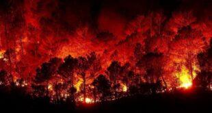 نتائج التحقيق في الحرائق التي شهدتها سوريا ستعلن قريباً