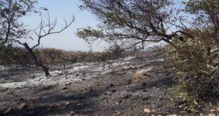 أكثر من ألفي حريق في سوريا عام 2020