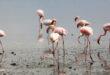 هل سمعتم عن بحيرة النطرون؟ حيث تتحول الحيوانات إلى تماثيل