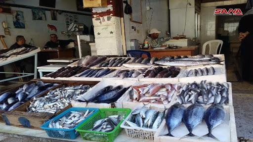 """فقط في سوريا الأسماك """"تحلق"""".. أغلى الأنواع بـ 90 ألف والأسعار تبدأ من 4000"""
