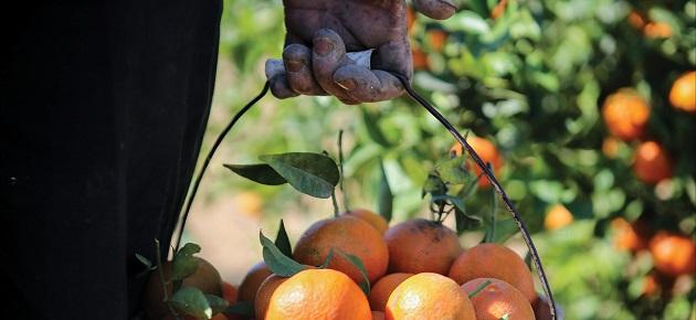 روزنامة زراعية قريباً لضبط الأسعار